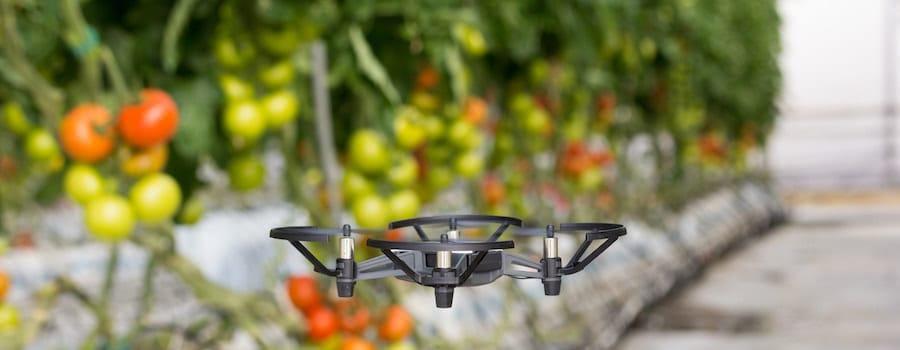 mini dron dji tello volando en invernadero