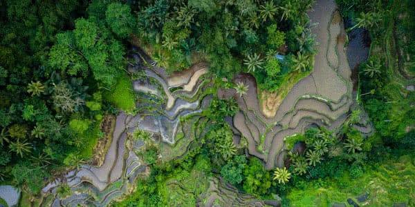 foto aerea con dron de bancales de arroz
