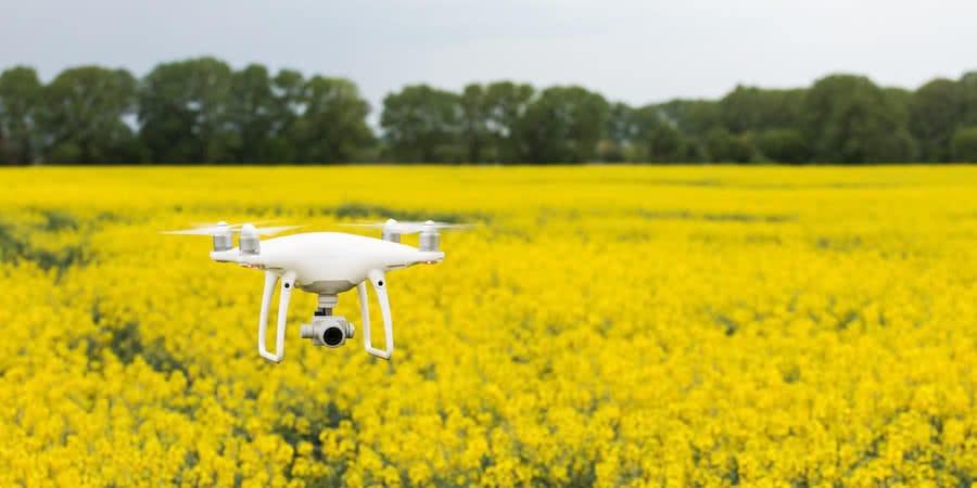 dron dji phantom 4 pro sobrevolando campo de flores amarillas con arboleda verde detras