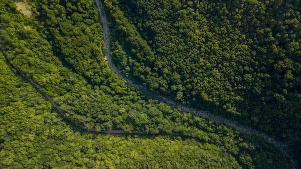 ladera con arboles y carretera estrecha